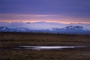 Hreindyr_Jokuldal_IcelandTB
