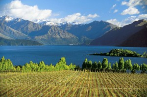 wine yard wanaka