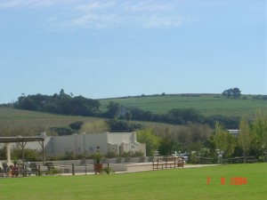 TheSpier_Vineyard_02