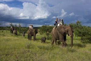 WH_ELEPHANTS01